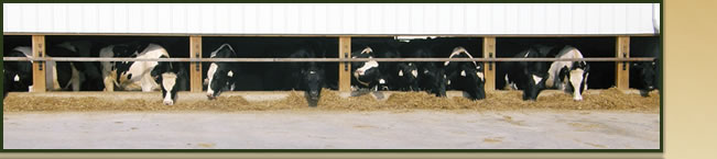 Seidl Dairy Cattle